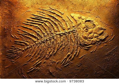 scary fish skeleton