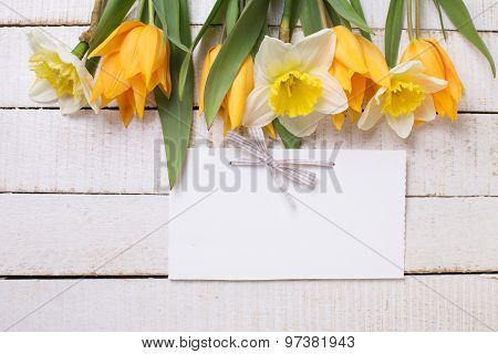 Fresh  Spring Yellow Narcissus And  Tulips Flowers As A Border And Empty Tag