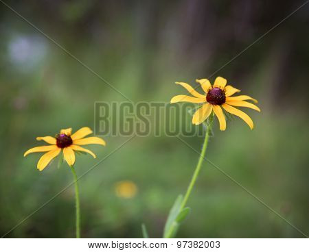a bunch of pretty daisy like flowers on a summer day in a field