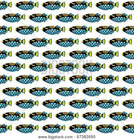 Clown Triggerfish Pattern