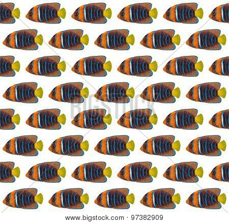 Passer Angelfish Pattern
