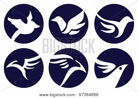 Bird Logo Vector Design