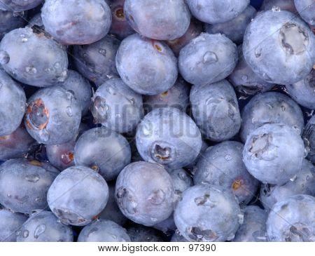 Blueberries-Horizontal