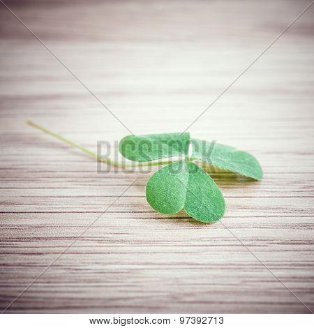 Closeup Clover Leaf On Wooden Background.