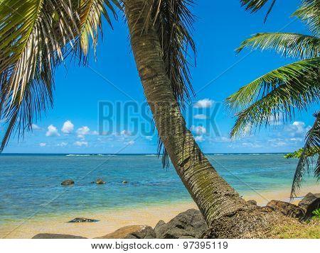 Kauai Tropical Beach