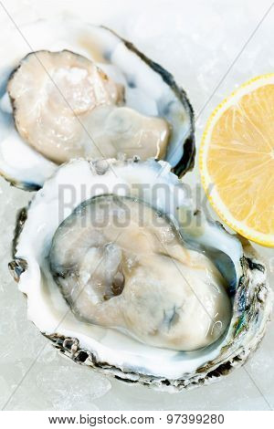Fresh Oysters For  Appetizer .