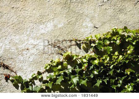 Jahrgang Mauer Hintergrund mit Reben - stilleben