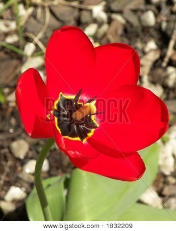 Hello Tulip.