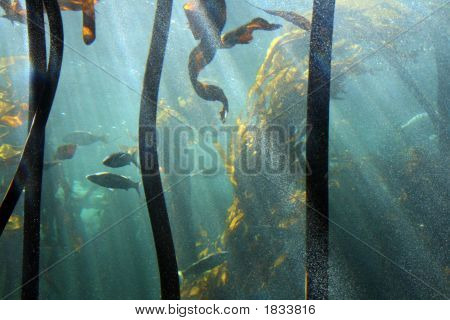 Underwater Seaweed Forest With Fish