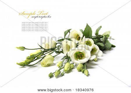 zarte Blume auf weißem Hintergrund