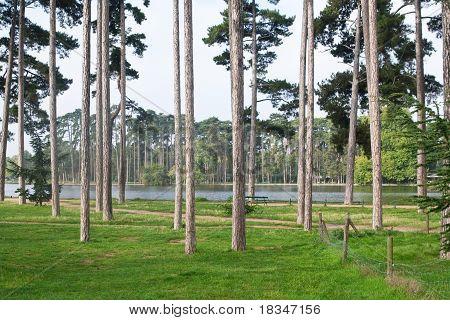 Le Bois De Boulogne, Paris