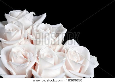 bundle of white rose on black