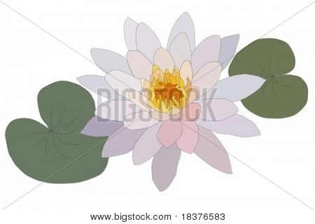vector Water lilly nymphaea - Irene