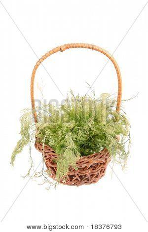 green algae in wicker basket isolated on white background