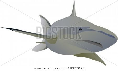 vector - big shark swimming forward