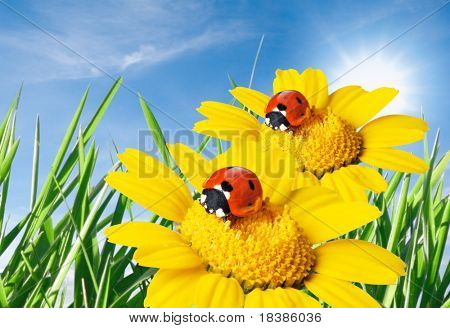 ladybug in a flower isolated against blue sky