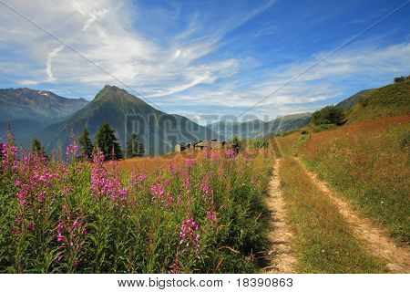 Unpaved road through the beautiful alpine field in Alps, northern Italy.
