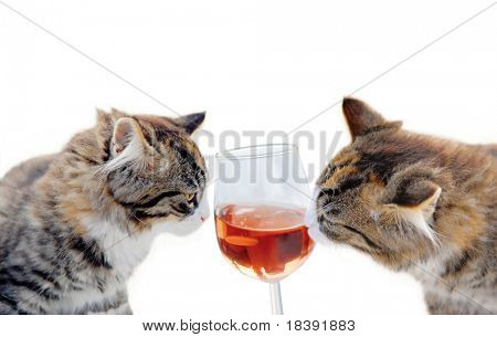 two cute young kittens sharing a glass of rose wine isolated on white background