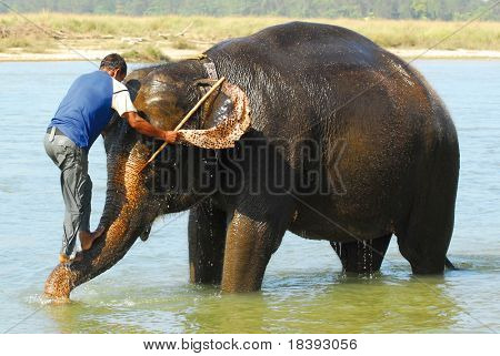 mounting an elephant (series: part 2 out of 5)