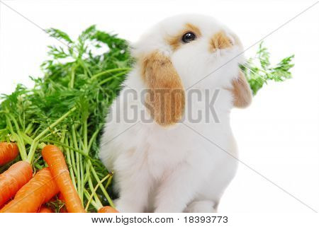 Cute curious white lop ear baby rabbit sitting next to his carrots