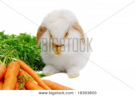 Thanksgiving: cute baby lop ear rabbit giving thanks with his paws clasped before eating his meal