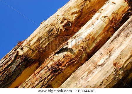 Background of stacked trees with blue sky