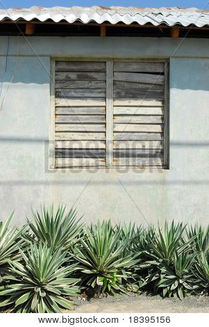 Old wall with barred window and green cactus plants in colonial town Baracoa, Cuba