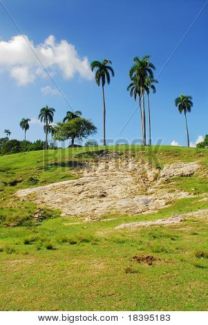 Tropical palmtrees on green grass hill
