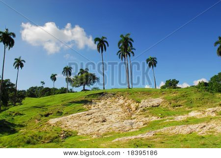 Tropical palm-trees on green grass hill