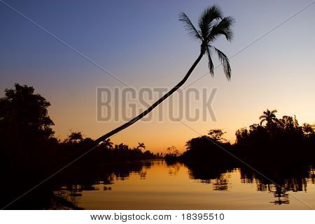 Romantic sunrise in Zapata swamp area with palm silhouette on caribbean island Cuba