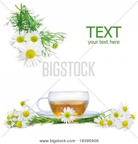 fresh camomile flowers and camomile herbal tea isolated on white square background
