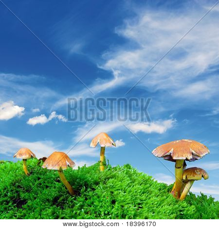 group of magic mushrooms on moss with blue sky square background