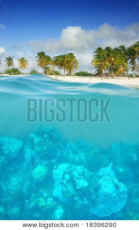 Underwater world with coral in the Caribbean with tropical beach and palm trees on Cuba