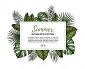 Summer Tropical Exotic Template. Label With Palm Leaves (monstera, Areca Palm, Fan Palm, Banana Leav poster