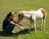 pic of paint horse  - beautiful country girl being greeted my her miniature horse foal - JPG