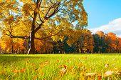 Autumn Colorful Landscape In Sunny Autumn Landscape Park Lit By Sunlight -autumn Park In Soft Sunlig poster