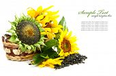 stock photo of sunflower-seed  - sunflower - JPG