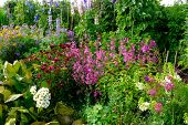 picture of english cottage garden  - A colourful typically English country cottage garden - JPG