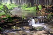 Forest river with waterfall poster