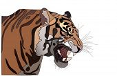 pic of tiger eye  - vector  close - JPG