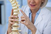 Mid section of female doctor holding spine model in medical office poster