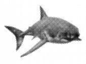 picture of loan-shark  - Shark - JPG