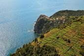 Aerial view on vineyards on the hills over Mediterranean Sea in Northern Italy.