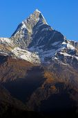 fishtail peak in the annapurna range in the himalaya in nepal poster