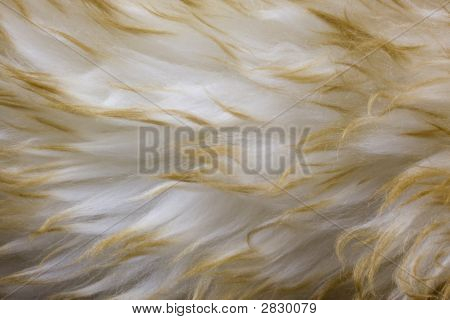 Lambskin - Fur Background With A Wavy Pattern