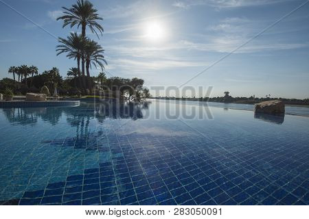 Tall Large Date Palm Tree