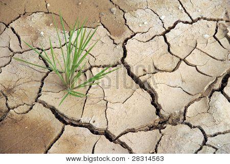 plant in the desert