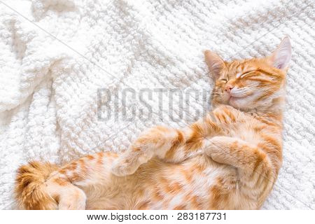 poster of Ginger Cat Sleeping On Soft White Blanket, Cozy Home And Relax Concept, Cute Red Or Ginger Little Ca