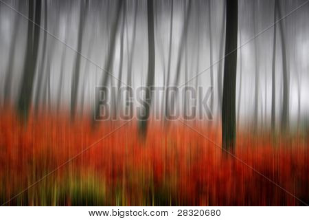 beautiful light in a autumn and beautiful forest, (up down camera movment)