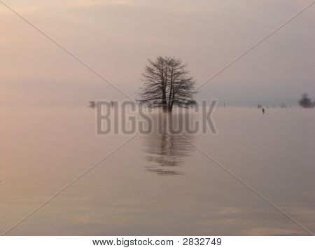 Reflection Of Tree On Lake